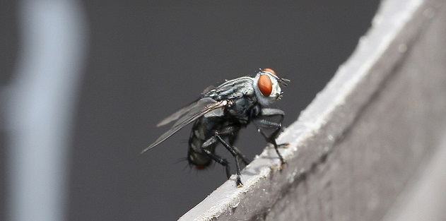 A laser beam can alter a fly's behavior and make it mate with just about anything — even a ball of wax, according to scientists at the Howard Hughes Medical Institute. The researchers have developed...